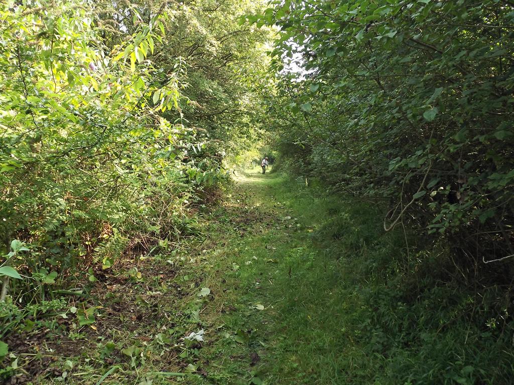Path cleared
