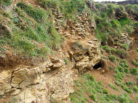 Linton Hill Corallian exposure