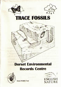 trace fossil leaflet